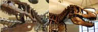 Giganotosaurus vs Tyrannosaurus
