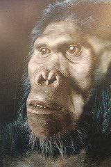 Homo habilis, Sterkfontein Caves exhibition