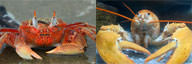 Crab vs Lobster