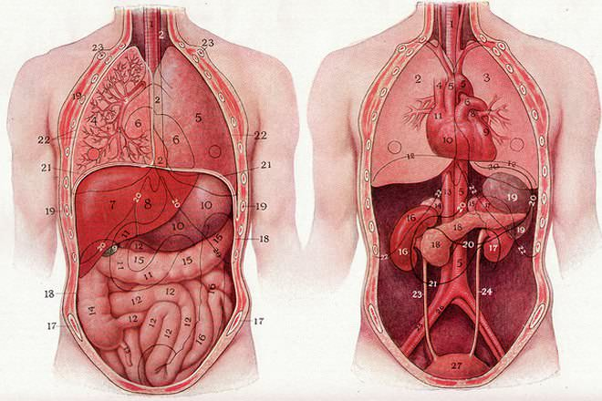 Where is the stomach located in the human body?