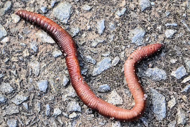 relationship between earthworm and soil