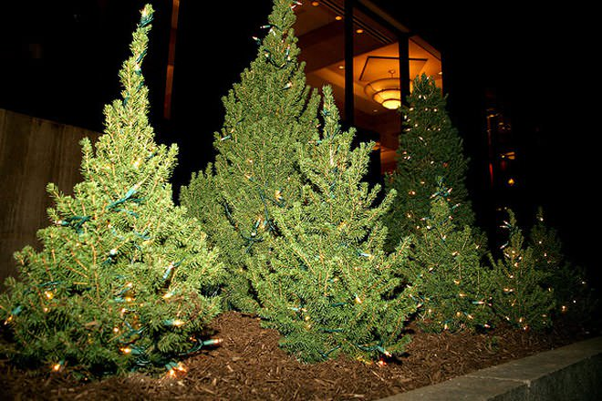 Real vs. Artificial Christmas Trees - Difference and Comparison ...