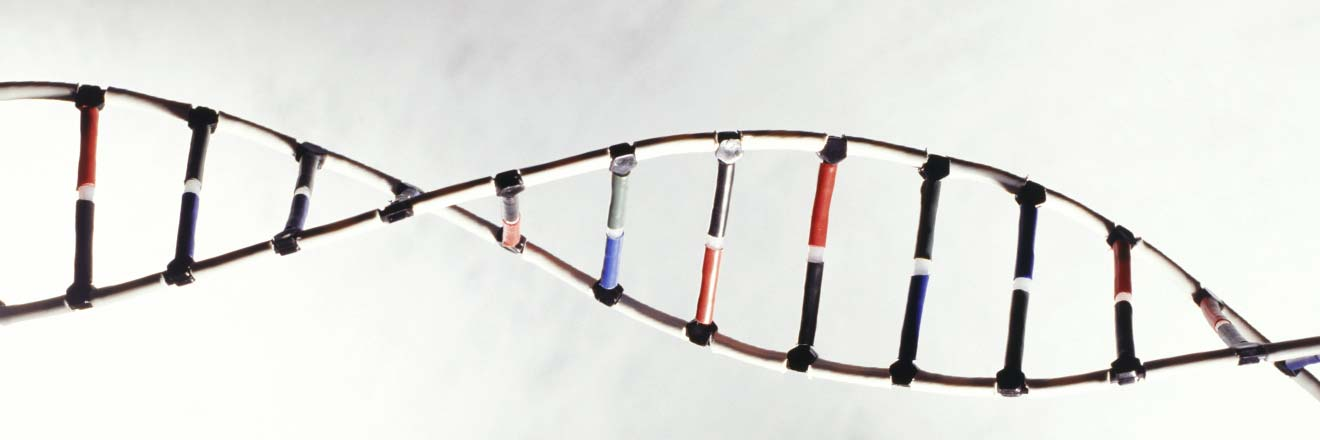 Allele Vs Gene Difference And Comparison Diffen