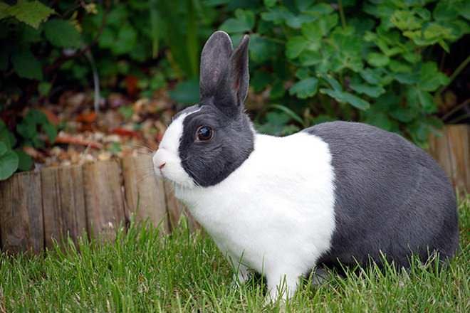 hare vs rabbit difference and comparison diffen