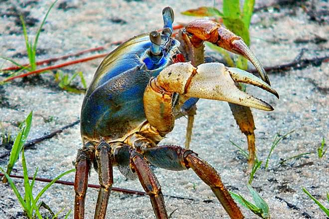 Crayfish Vs Crab
