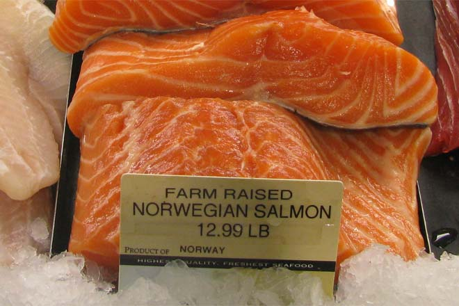 Farm-raised Salmon