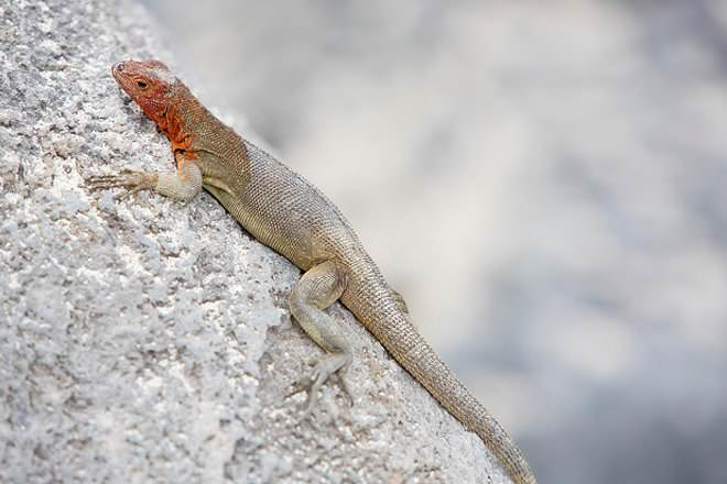 Gecko Vs Lizard
