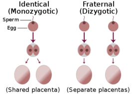 Zygosity of fraternal and identical twins.
