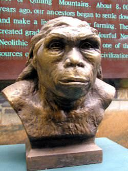 A reconstruction of the head from a skull of a Paleolithic man excavated from Gongwangling, Lantian County.