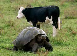 A tortoise shell is shaped like a dome.