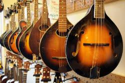 Mandolins of different kinds