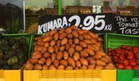 Kumara (sweet potato) in New Zealand.