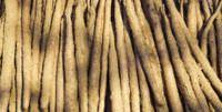 Long, skinny Chinese yams.