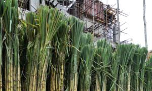 Sugarcane displayed for sale at College Street Market, Kolkata.