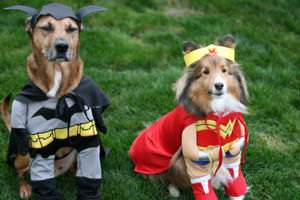 Dogs dressed up as Batman and Wonder Woman